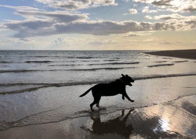 Off the Lead, Aberdovey Beach
