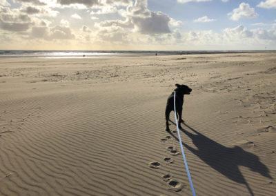 Dog Friendly Beach, Aberdovey